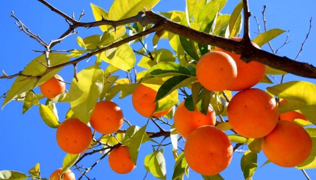 Sinaasappelstad Valencia