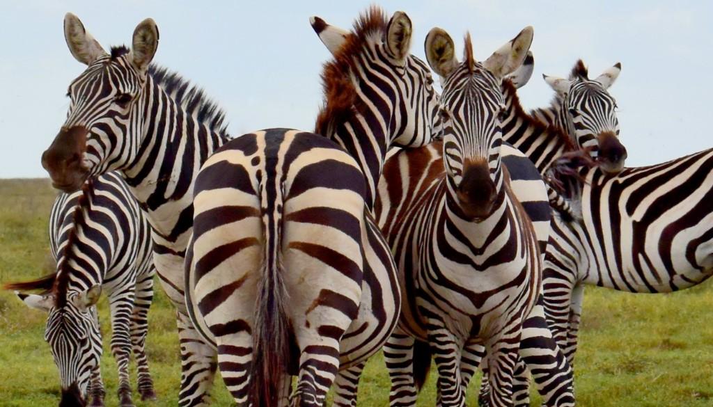 'Kampeersafari in Tanzania'