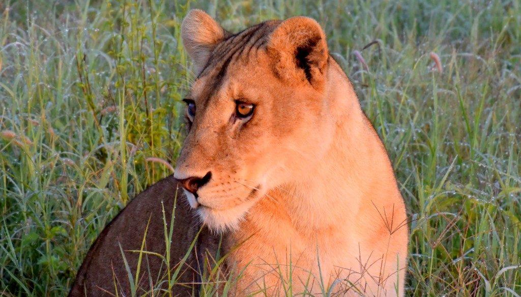 Budget safari in Tanzania