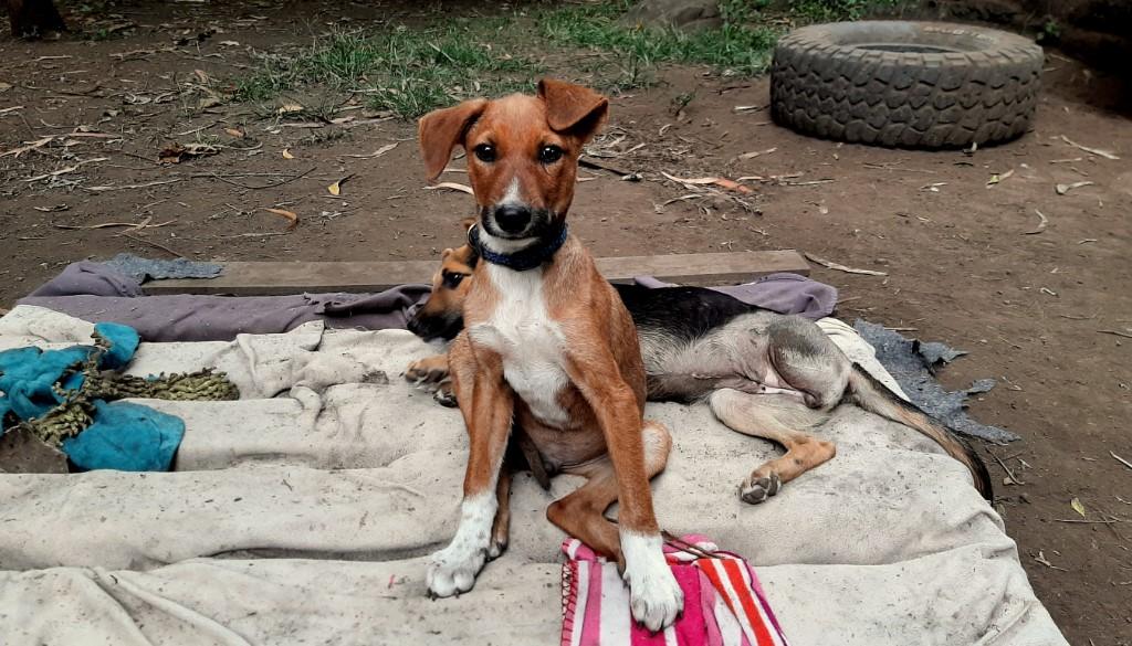 Vrijwilligerswerk in een dierenopvang in Tanzania